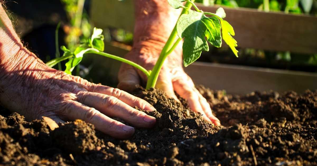 Lose weight with your home vegetable garden - How to lose weight with organic gardening? https://organicgardeningeek.com