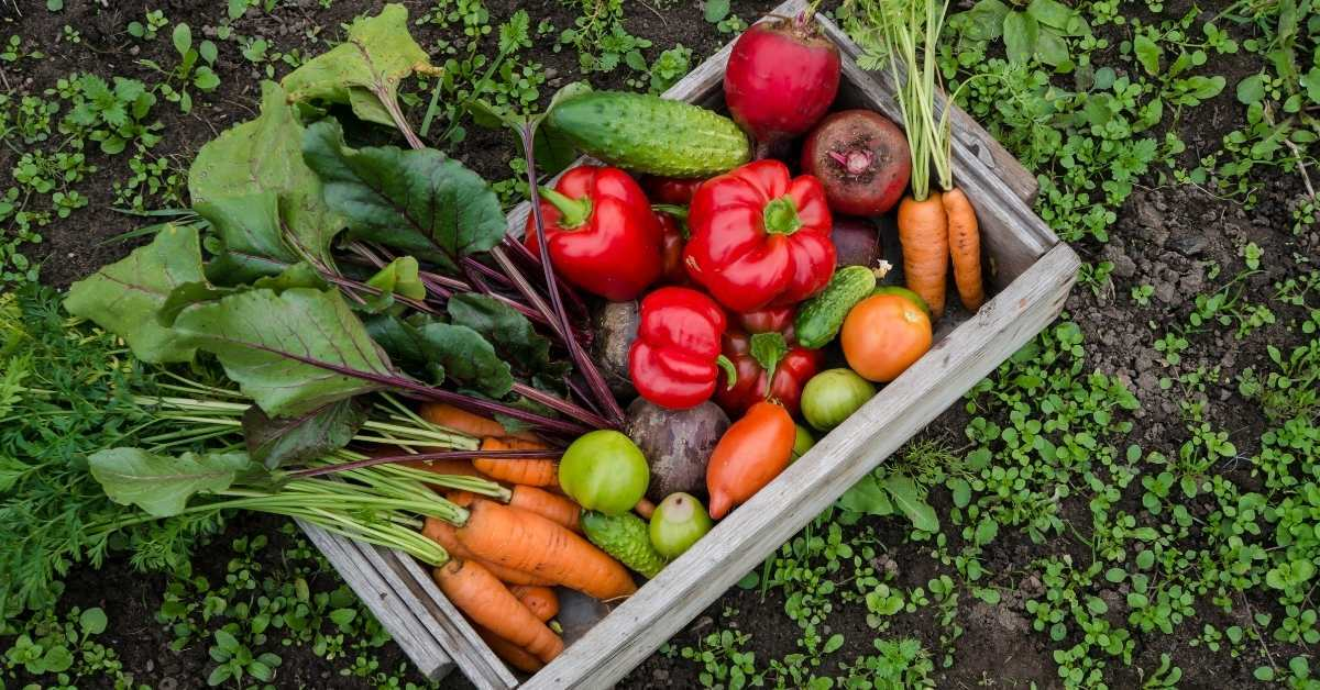 How to lose weight with organic vegetables from your garden https://organicgardeningeek.com