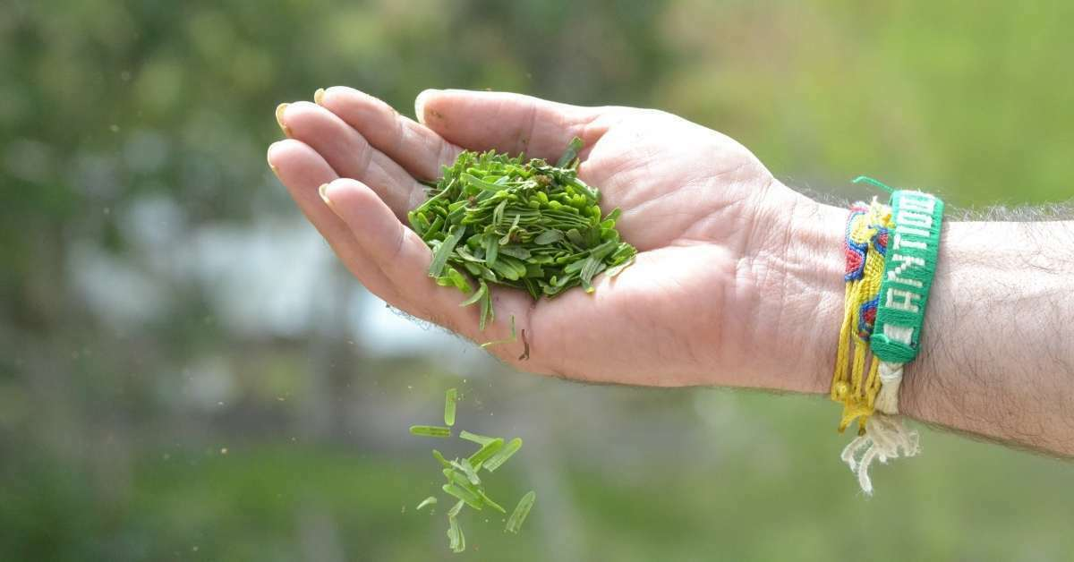 How to Treat Your Yard with Natural Lawn Care and maintain a healthy yard? https://organicgardeningeek.com