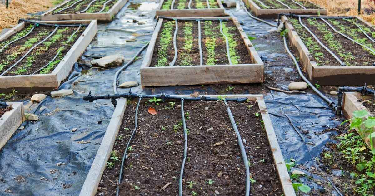 How difficult is organic gardening and how to become a successful organic gardener? https://organicgardeningeek.com