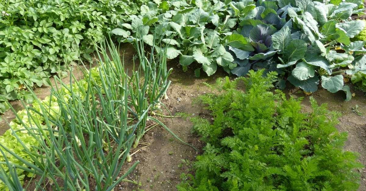 organic gardening and health https://organicgardeningeek.com