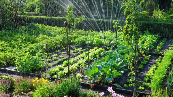 waterign the plants facts to consider https://organicgardneingeek.com