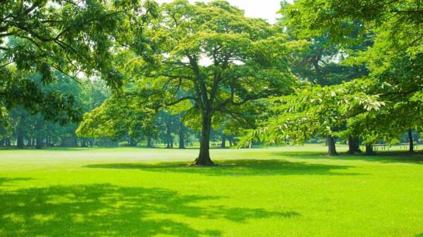 Planting a lawn https://organicgardeningeek.com