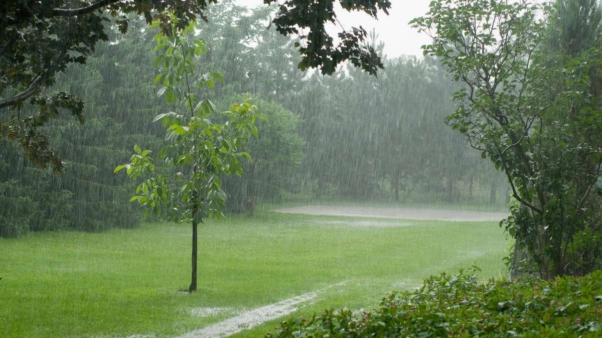 Homeowner Lawn Care - Watering During Summer - how and when to water lawns properly? https://organicgardeningeek.com