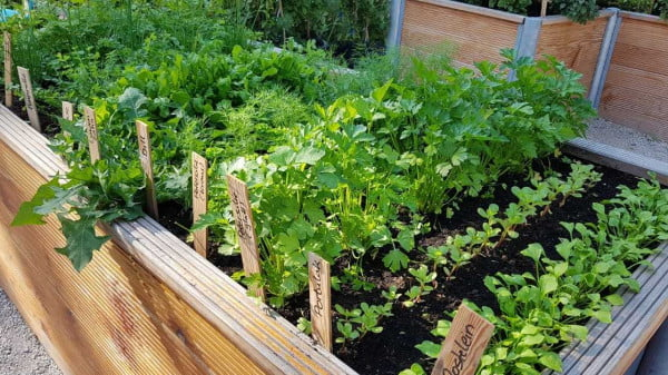 raised bed gardening - All about sustainable and organic gardening tips and tricks. 2021 - Spring Pruning,spring pruning roses,spring pruning clematis,honeysuckle pruning,Best Time To Prune Bushes - https://organicgardeningeek.com/spring-pruning-best-time-to-prune-bushes/