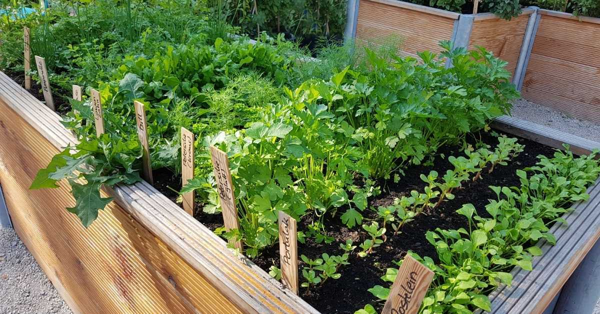 raised bed gardening - All about sustainable and organic gardening tips and tricks. 2021 - https://organicgardeningeek.com/tag/benefits-of-raised-bed/
