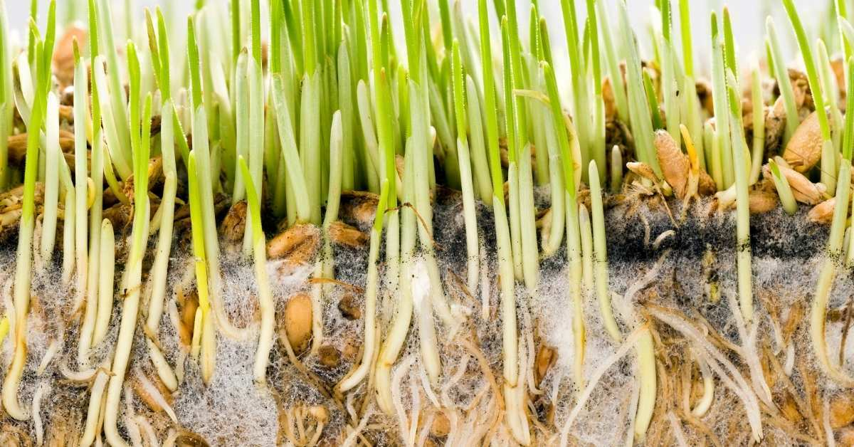 Root Zone Heating For Greenhouse Crops: What You Need To Know - hot water systems, plant root zone temperature requirements   https://organicgardeningeek.com