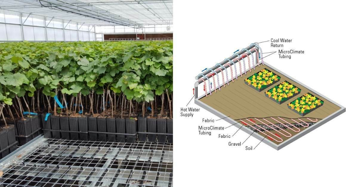 Root zone heating for greenhouse crops https://organicgardneingeek.com