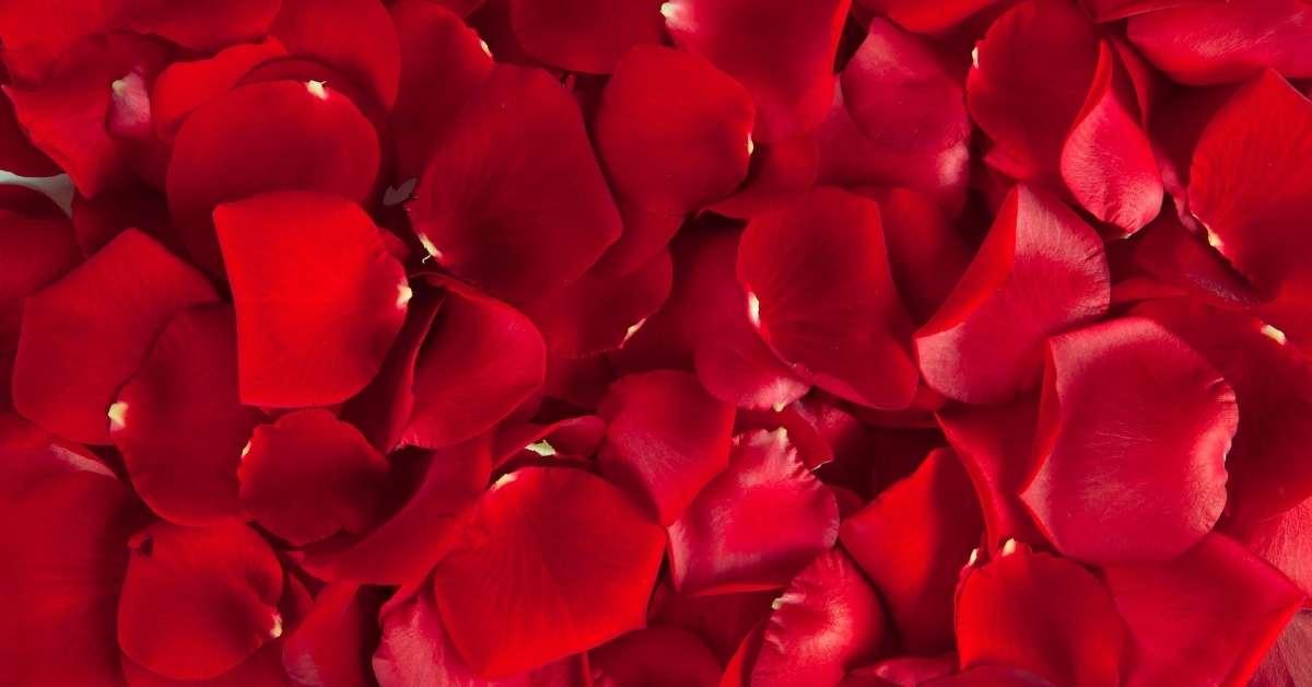 Rose Petals -edible rose petals and hips and recipes https://organicgardeningeek.com