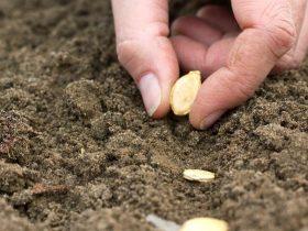 seeding methods https://organicgardeningeel.com
