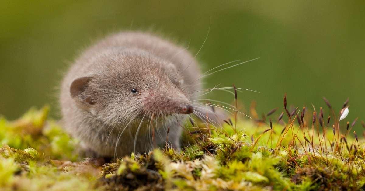 Ultimate Ways To Get Rid of Moles in The Yard in 2021 https://organicgardenigeek.com