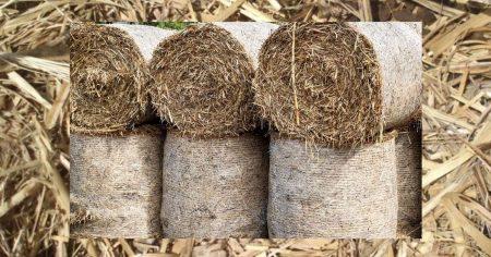 What is Sugar Cane Mulch used for https://organicgardeningeek.com