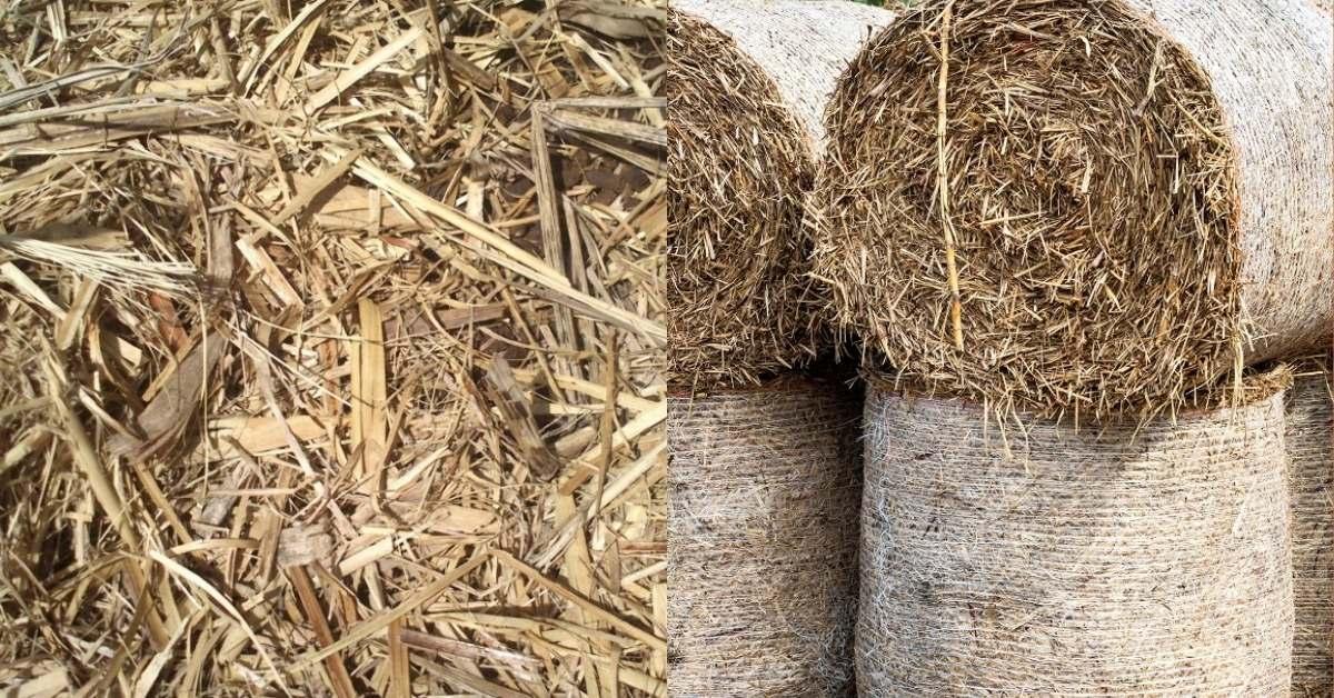 Where Sugar Cane Mulch Comes From https://organicgardeningeek.com