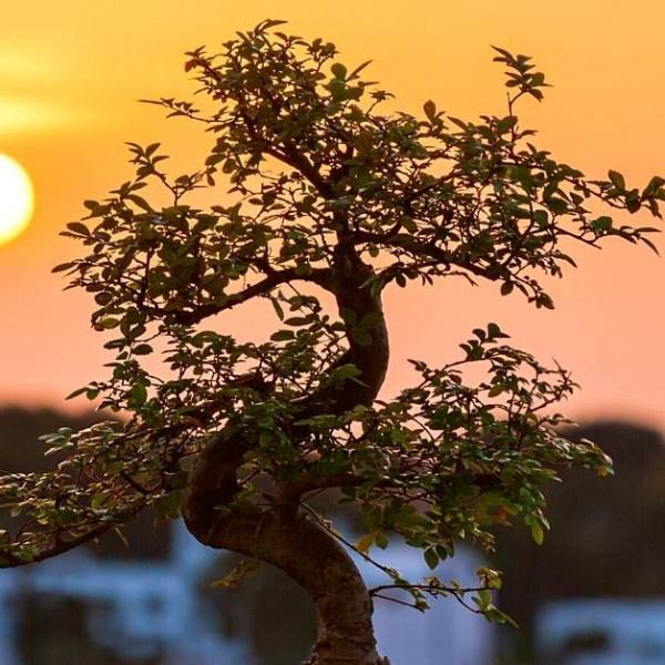 choosing the right bonsai pots https://organicgardeningeek.com