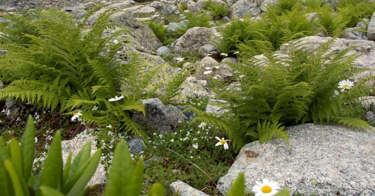 Choosing and Placing Your Rocks - Growing Alpines in Containers https://organicgardeningeek.com