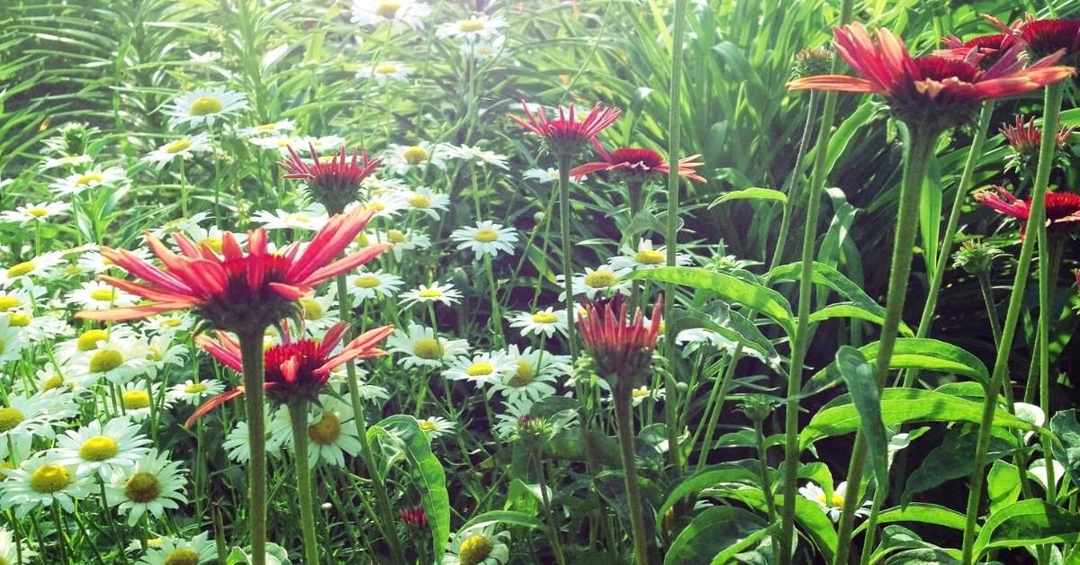 50+ Full Sun Perennials To Start Growing https://organicgardeningeek.com