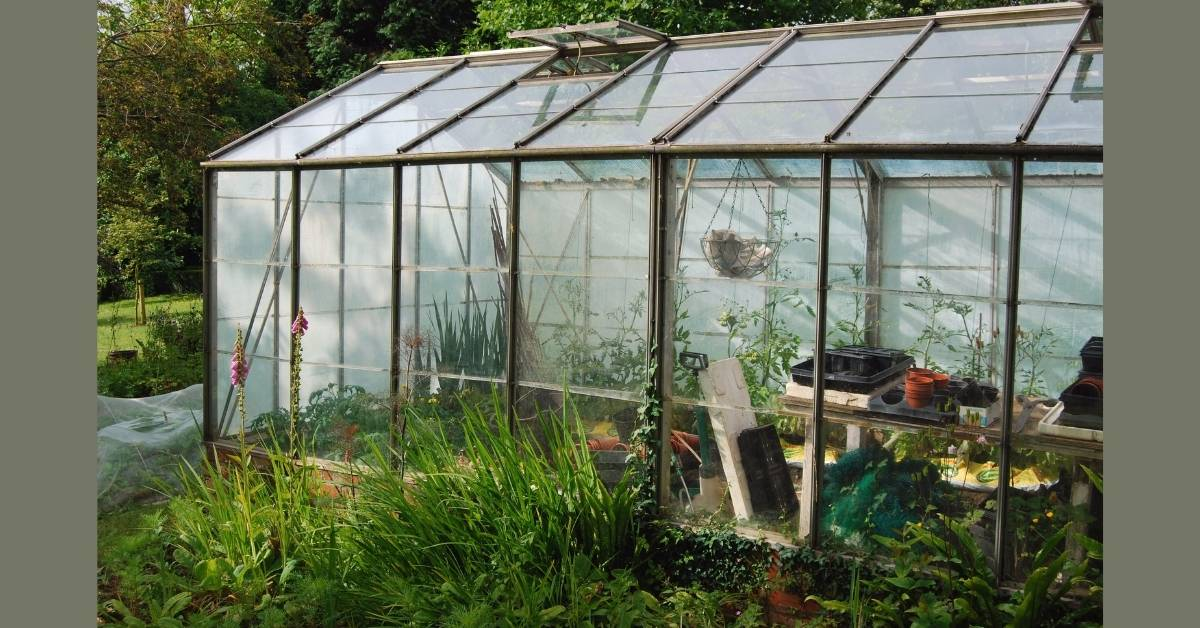 greenhouse tomato plant - All about sustainable and organic gardening tips and tricks. 2021 - growing tomatoes in a greenhouse,Essential Production Requirements for tomatoes,growing tomatoes in the greenhouse,Owner Operator Grower,Do greenhouse tomatoes need pollination - https://organicgardeningeek.com/growing-tomatoes-in-a-greenhouse-essential/