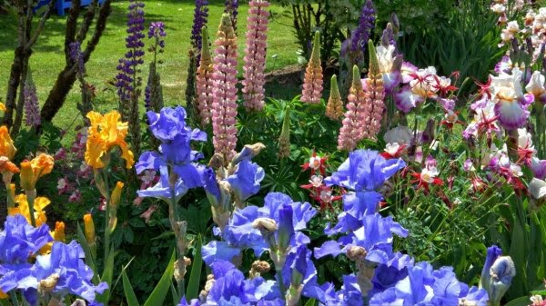 How to plant an iris garden https://organicgardeningeek.com