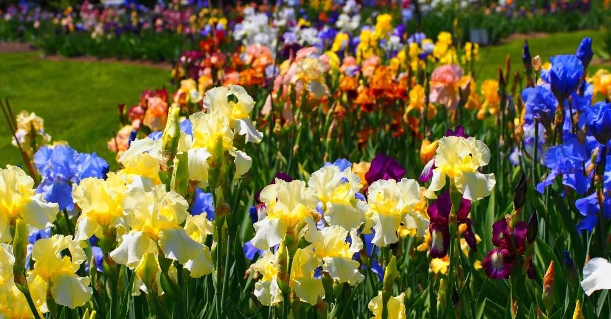 iris garden design https://organcigardeningeek.com