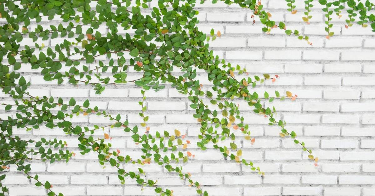 What to do in case of poisoning with ivy - How toxic is ivy for animals? https://organicgardeningeek.com