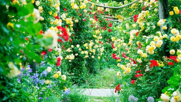 Rose Gardening tips and tricks https://organicgardeningeek.com