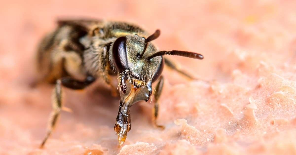 Using Pesticides to kill Sweat Bees https://organicgardeningeek.com