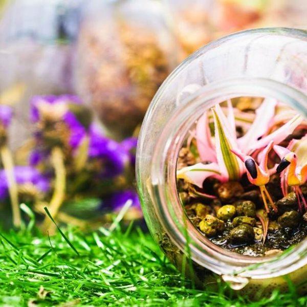 getting started with terrarium gardening https://organicgardeningeek.com