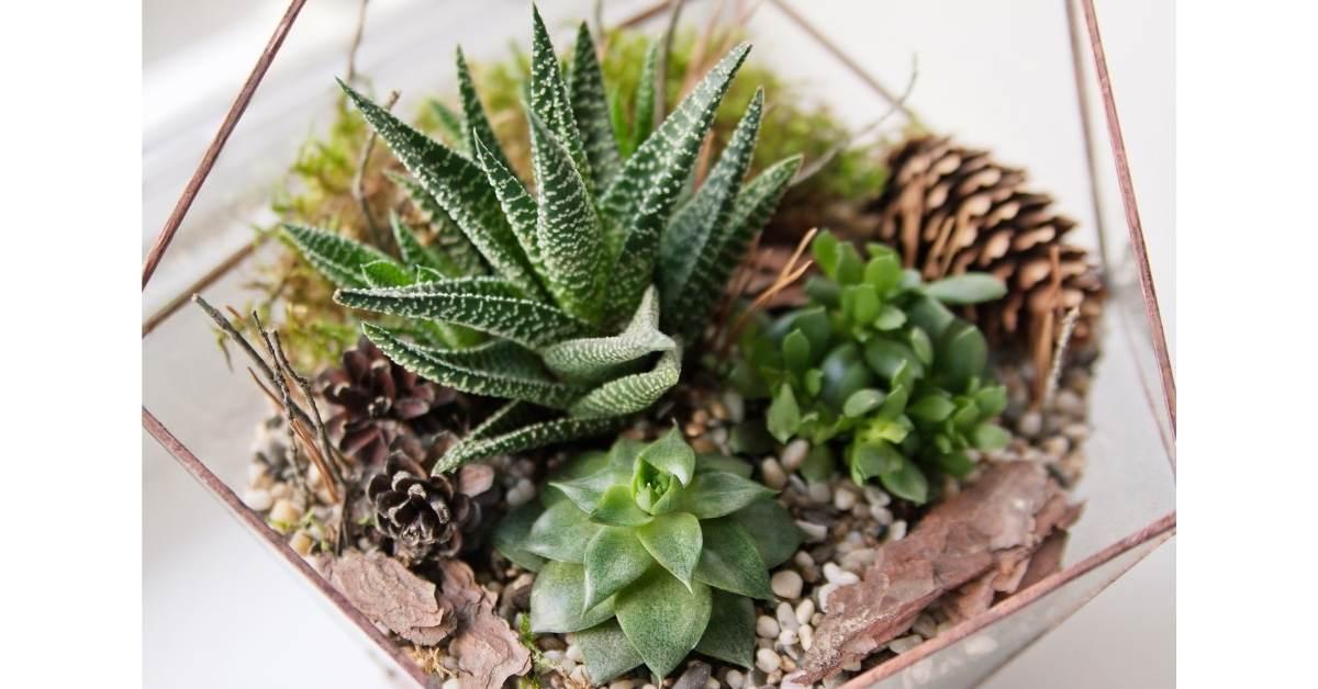 Landscaping and Decorations for terrarium https://organcigardeningeek.com