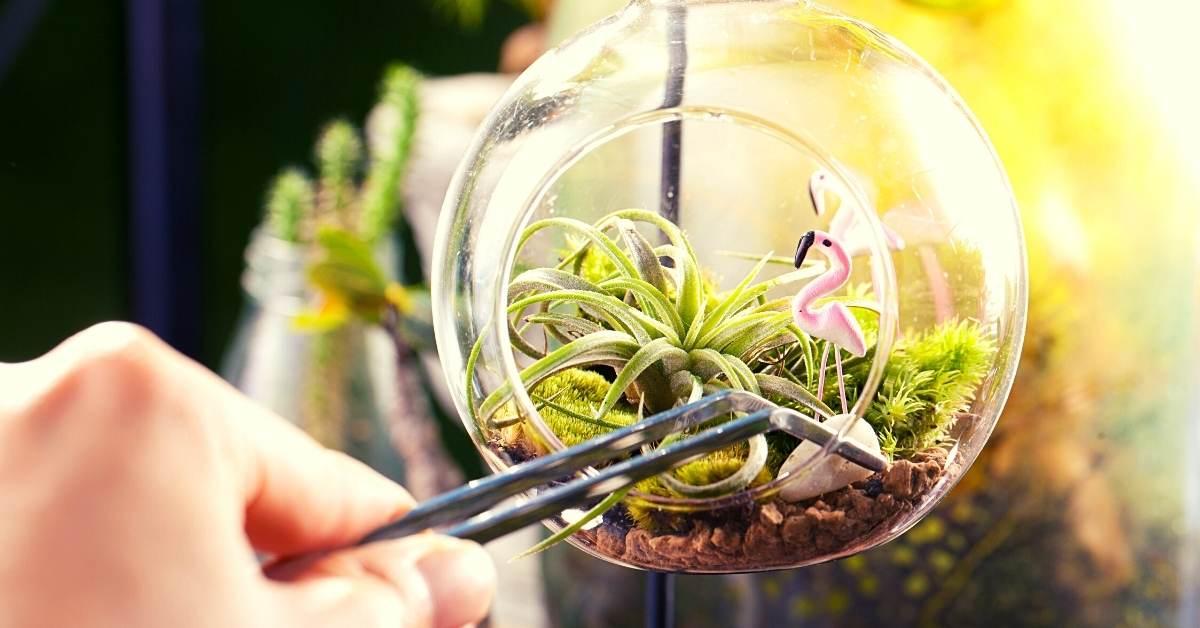 Suitable Plants for terrarium gardening business https://organicgardeningeek.com