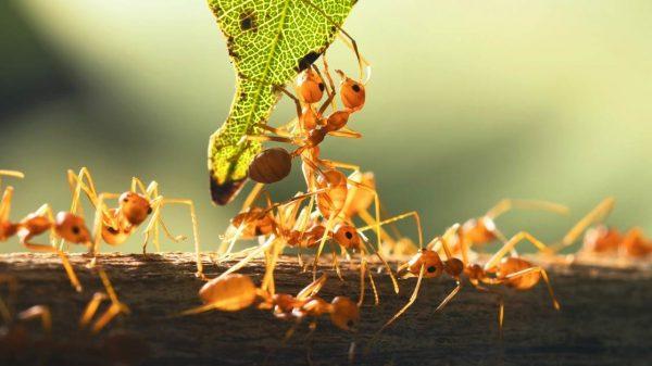 Natural ways of dealing with ants in the garden https://organicgardeningeek.com
