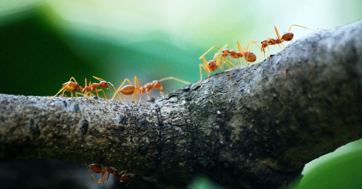 dealing with ants in the garden - All about sustainable and organic gardening tips and tricks. 2021 - ants in the garden,Ways to Deal with Ants in the Garden,how to get rid of ants in the garden,how to kill ants in the garden,how to get rid of ants in the garden naturally - https://organicgardeningeek.com/5-ways-to-deal-with-ants-in-the-garden/