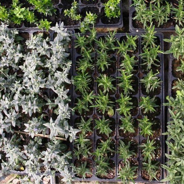 Growing an indoor herb garden https://organicgardeningeek.com
