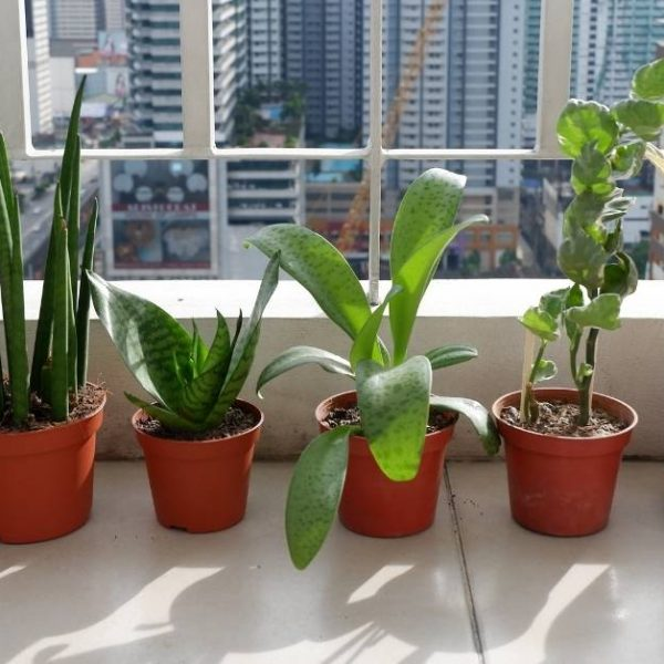 Best indoor plants to grow https://organicgardeningeek.com