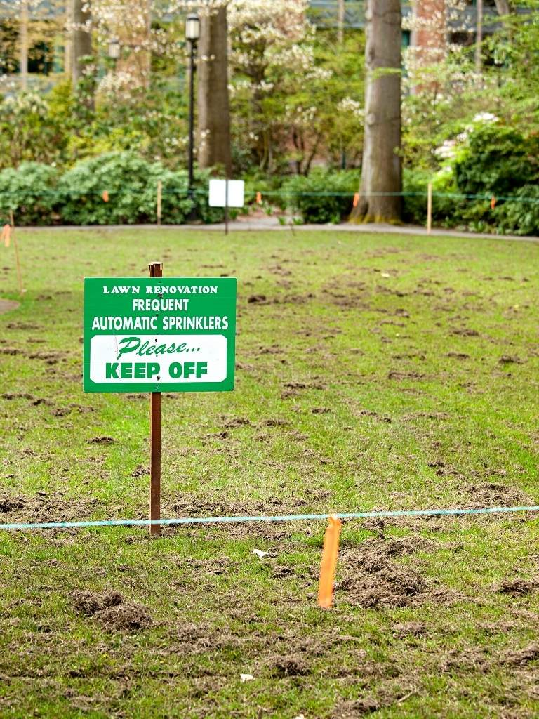 Can you walk on grass seed? https://organicgardeningeek.com