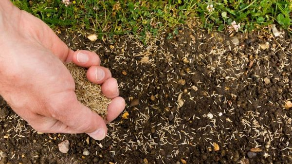 hwo to seed a lawn https://organicgardeningeek.com