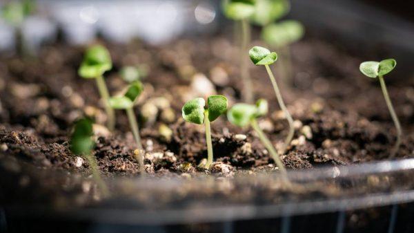 How to start seeds indoors https://organicgardeningeek.com