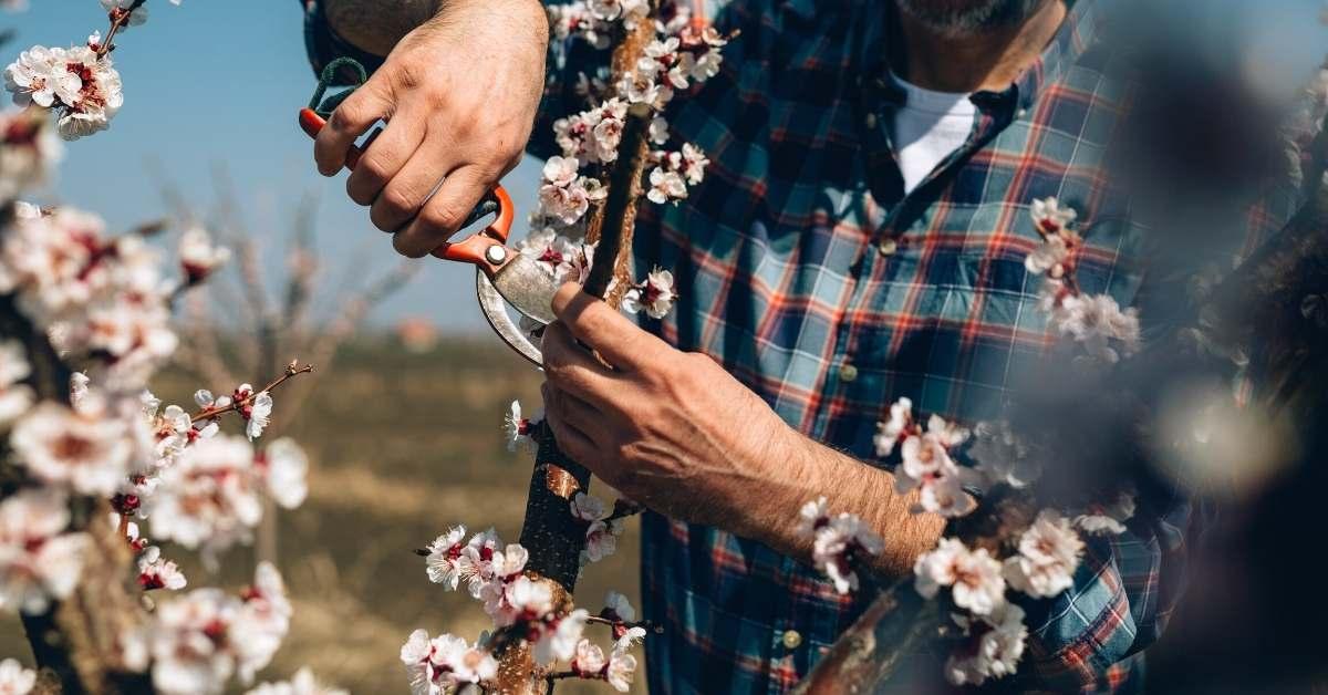 Spring pruning https://organicgardeningeek.com
